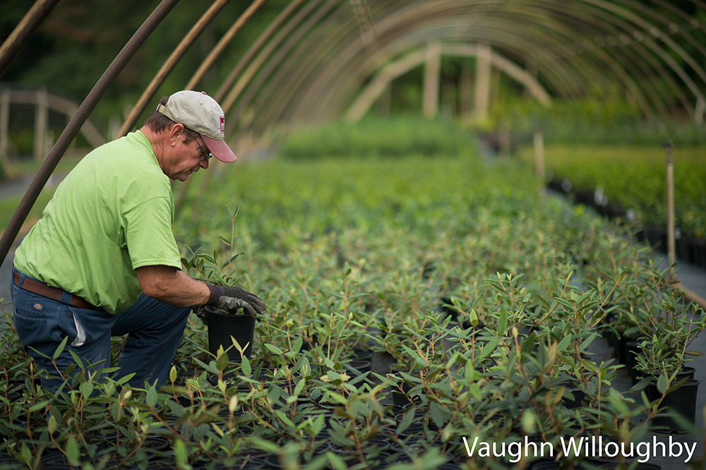 The Nursery Business Was Doing Well Until The Recession Began In 2008.  Thankfully, The Landscaping Part Of The Business Has Kept Things Going.